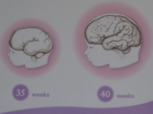 Baby's brain development